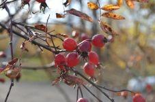 Фотоконкурс «Осенние мотивы»